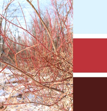 Red branches in winter