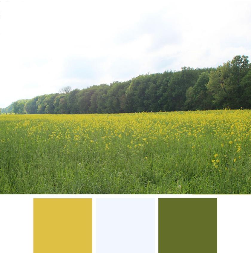 flower field color scheme