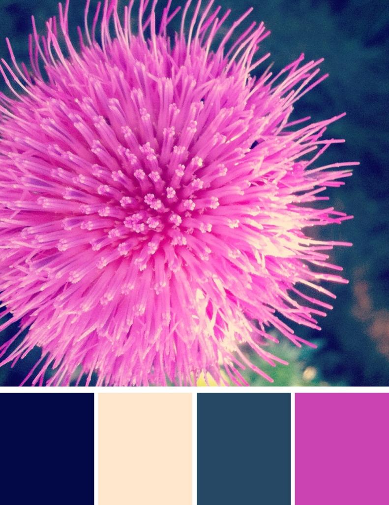 Thistle blossom