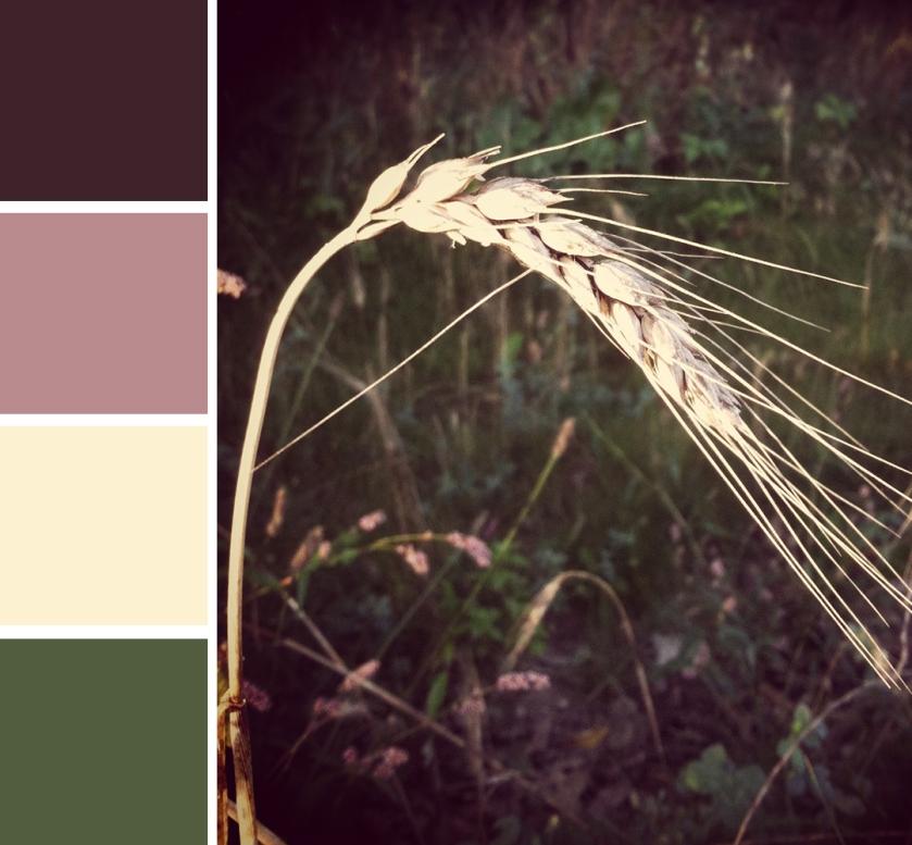 wheat thing