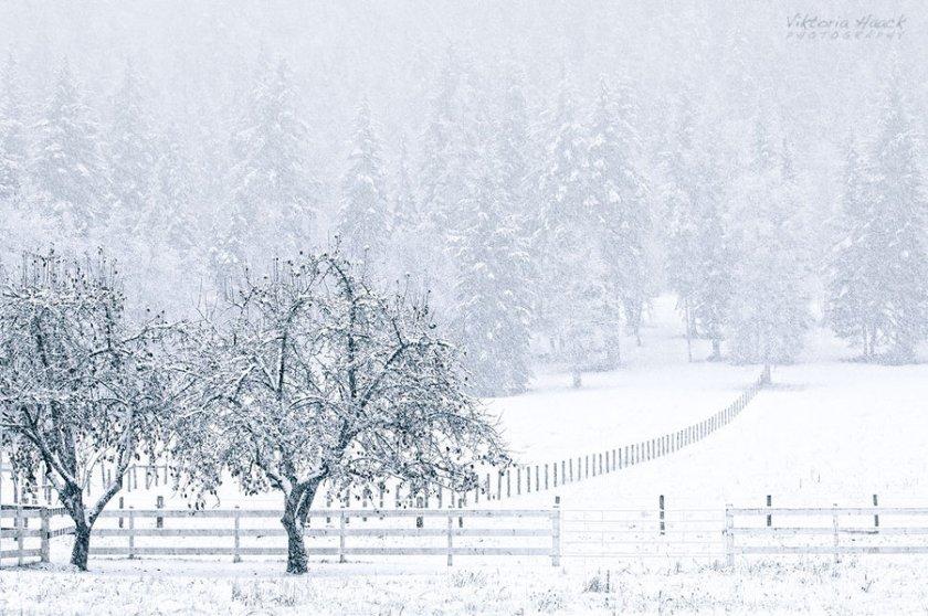 silent_snow_by_islandtime-d4jje7z