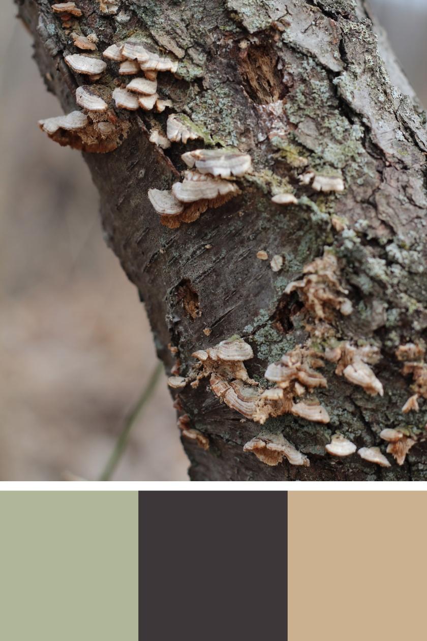 Winter Lichen